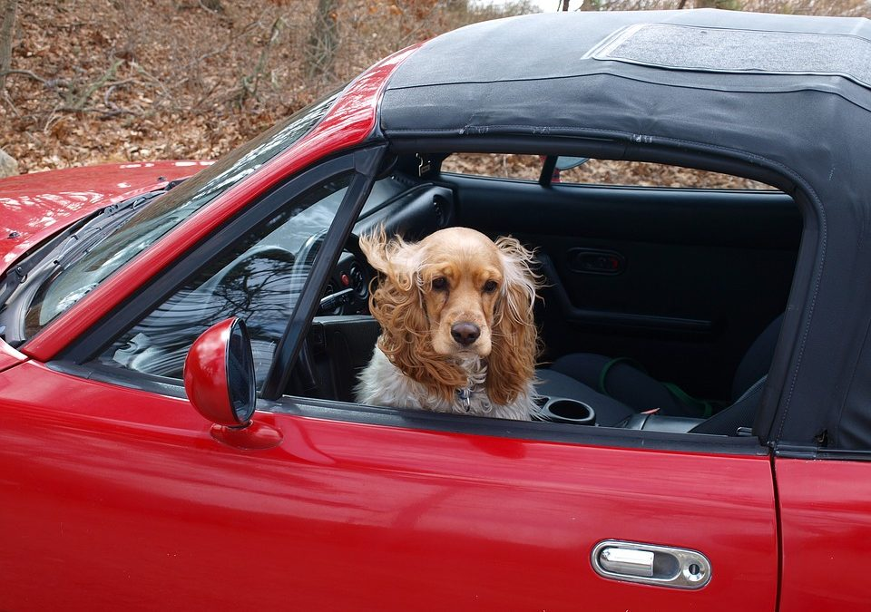 Keeping your Pet safe while you drive