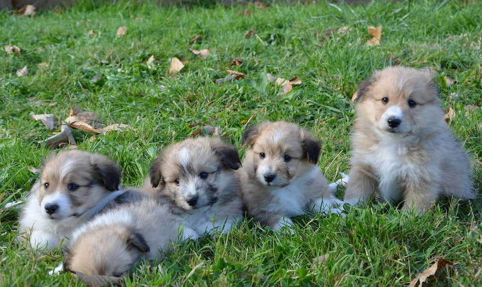 10 Things You Need to Know About Puppies