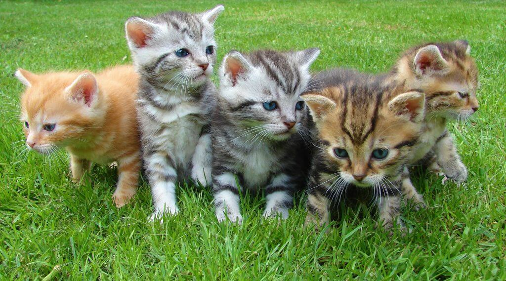 10 Things you need to know about Kittens