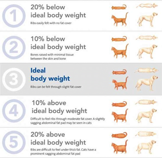 Pet Nutrition Chart