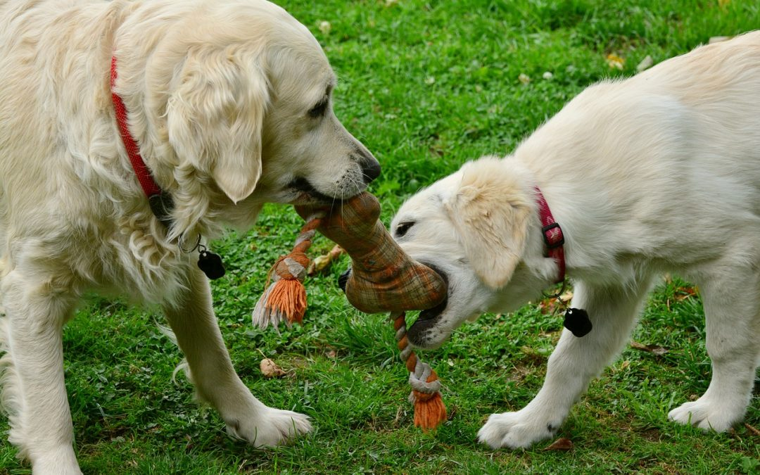 Tips for Choosing Dog Toys