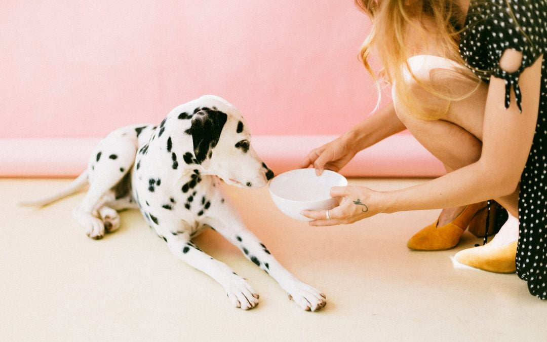 Vet Clinic asks Are You Washing Your Pet's Dish Enough